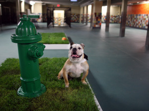 Pooch Hotel Hollywood Grand Opening